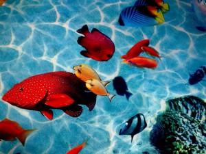 Наливные полы недостатки и преимущества